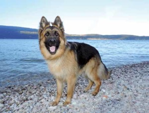 Spiagge-per-cani4