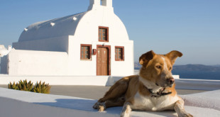 cane in chiesa