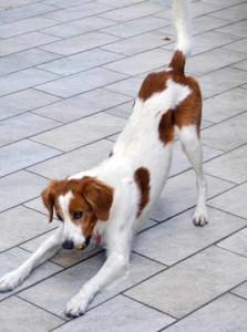 contagio emotivo nei cani