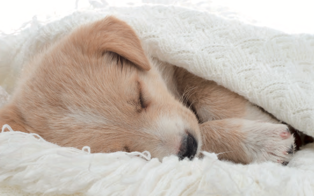 sonno degli animali