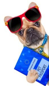 vacanze-con-il-pet2