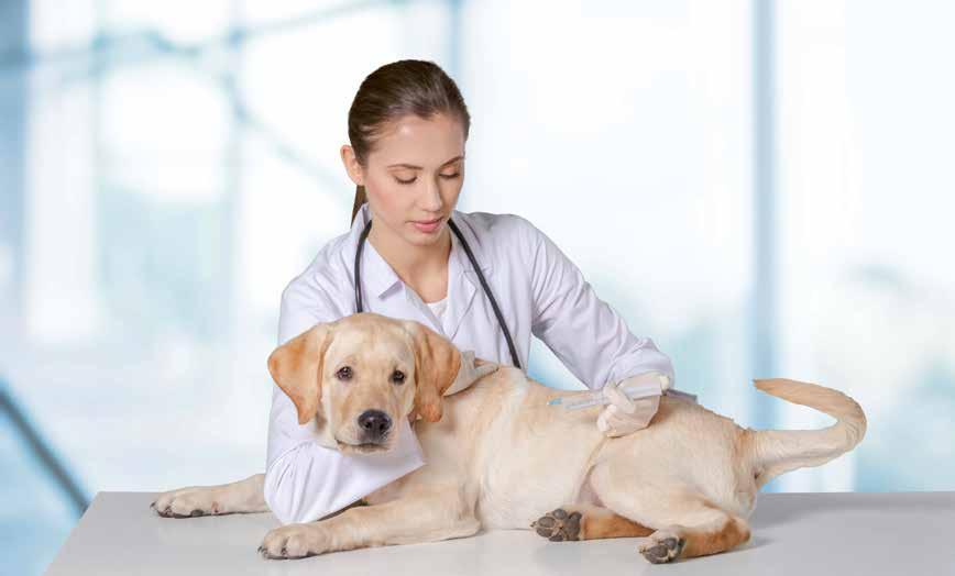 Microchip per il cane
