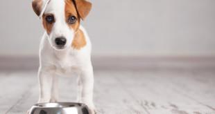 Crocchette per cuccioli
