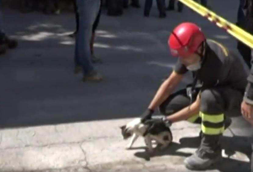 Salvano una gatta