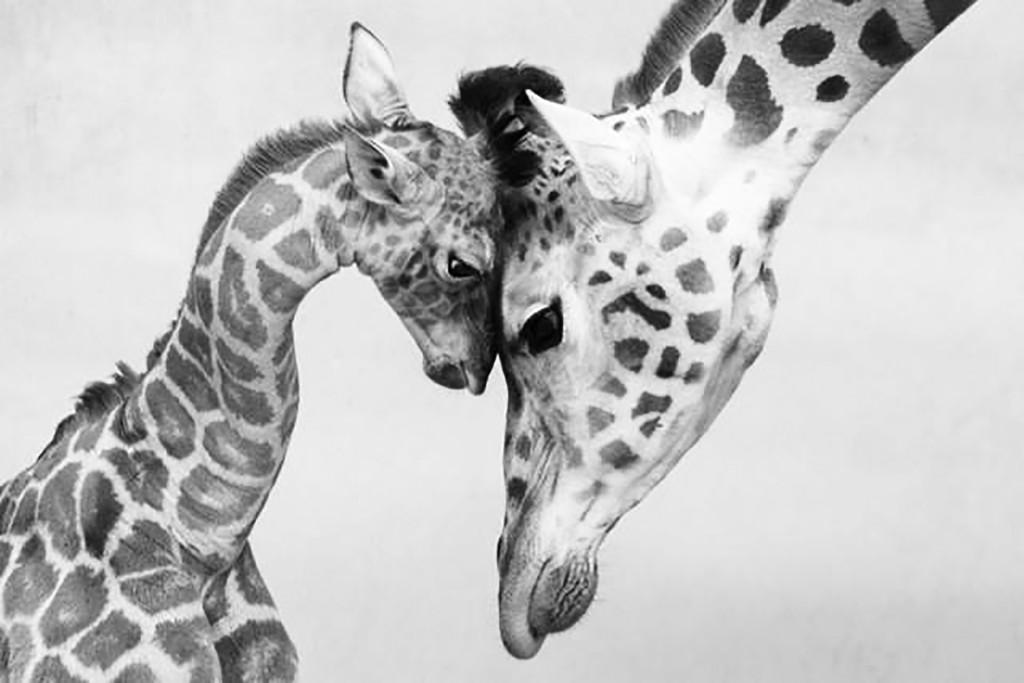 sentimenti negli animali