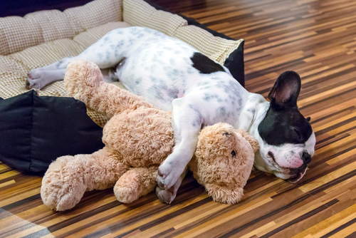 cosa sognano i cani