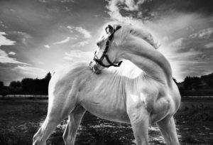 Via Lattea, la cavalla albina