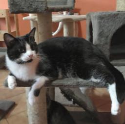 gatti-da-adottare3