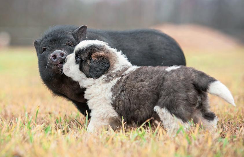 Gli animali provano sentimenti