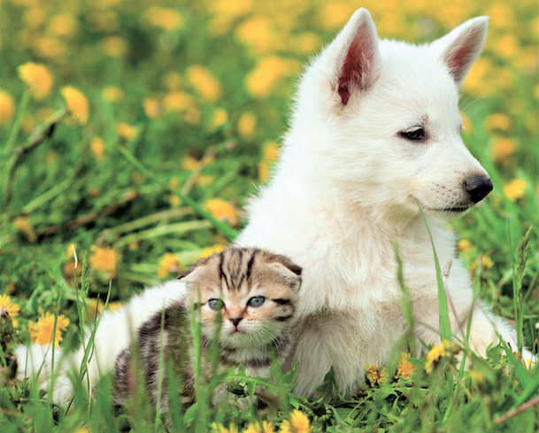 Omeopatia veterinaria