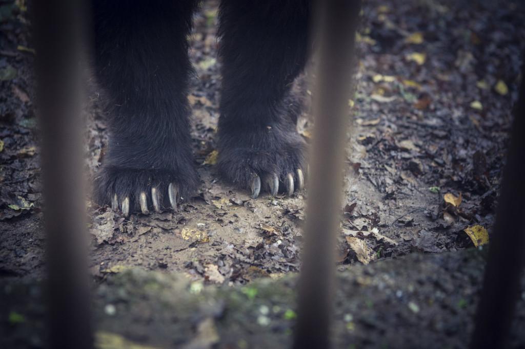 SSalvi - Animali, rifugi e libertà