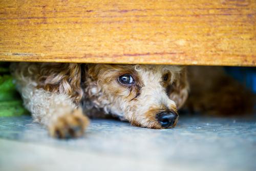 i cani sentono prima il terremoto