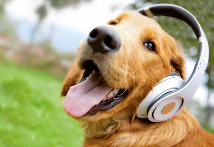 Cani e musica