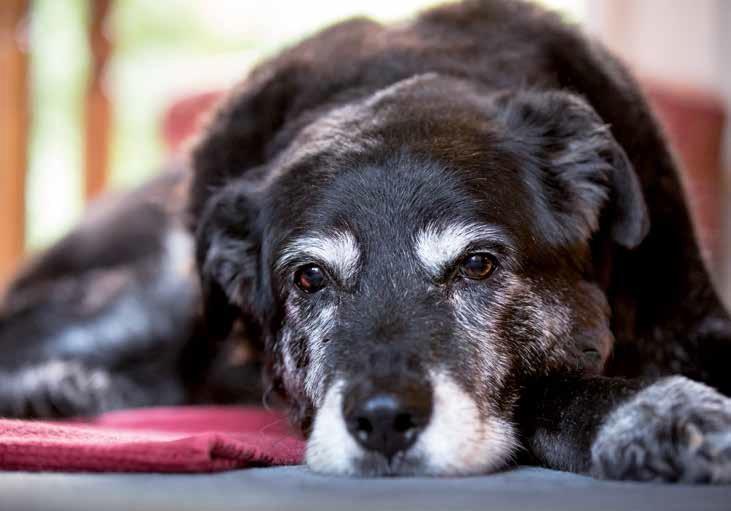 Effetti della vecchiaia negli animali domestici quattro for Rivista di programmi domestici