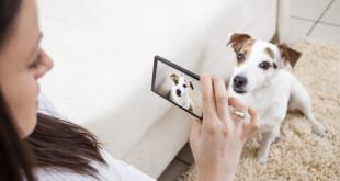 Fotografare cani e gatti