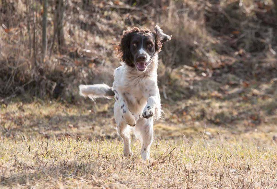 Giocare Con Il Cane Sport Per Cani Da Caccia