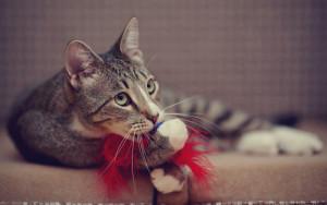 giocare-con-il-gatto