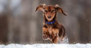 I cani soffrono il freddo