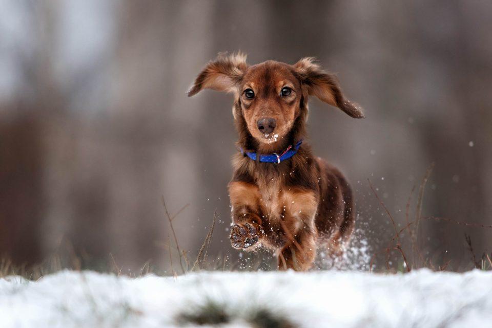 I Cani Soffrono Il Freddo Consigli E Cibo Per Linverno Quattro Zampe