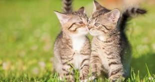 I gatti amano