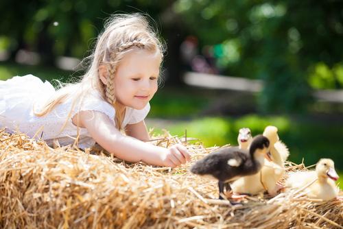 Il bambino e l'animale
