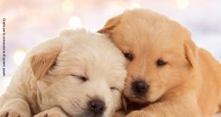 regali di natale per chi ama gli animali