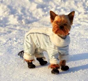Animali in inverno