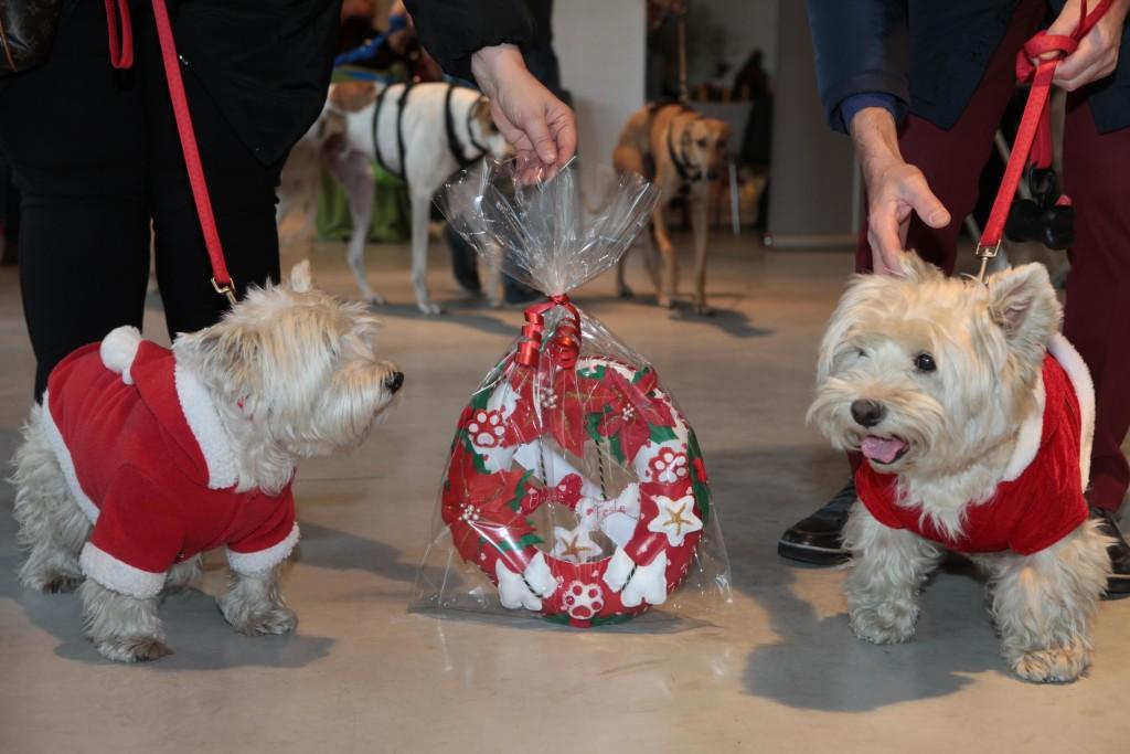 Natale per i cani