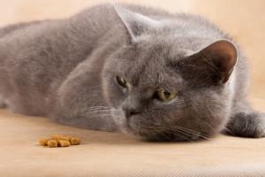 Quanto deve mangiare un gatto