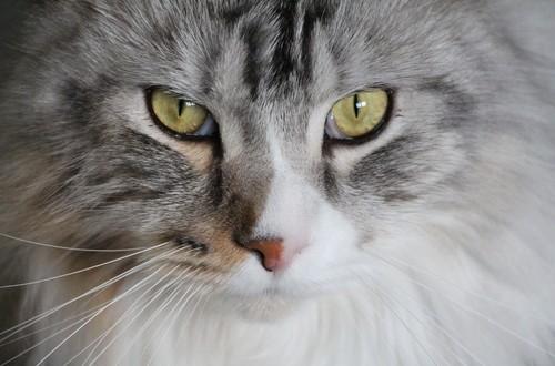 gatti sterilizzati