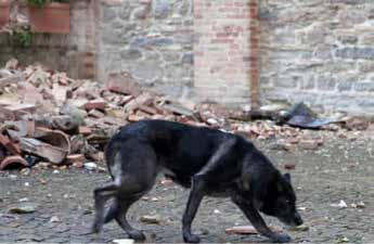 Animali e terremoto