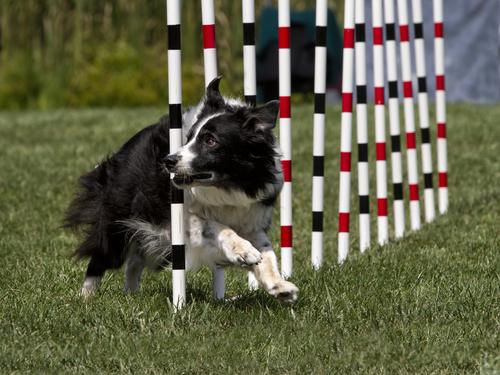 Corsi di agility