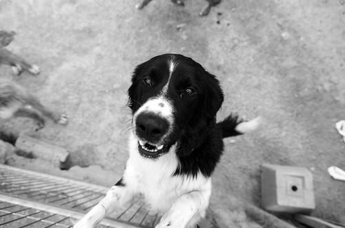 Adottare un cane