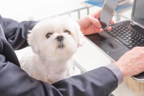 Al lavoro con il cane