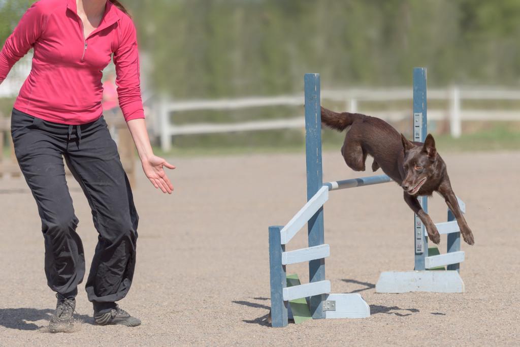 Campionati di agility