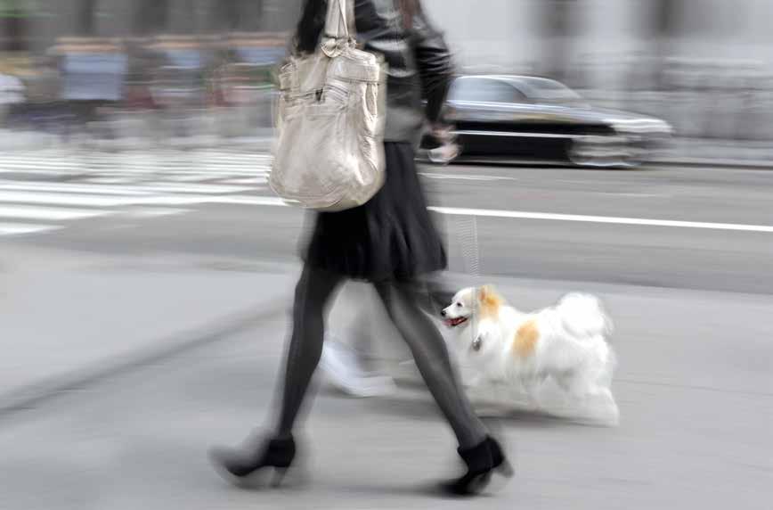Cani in città