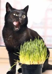 Dieci comportamenti del gatto