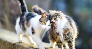 Dieci-comportamenti-del-gatto3