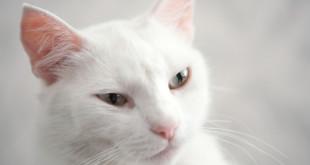 Giornata del gatto