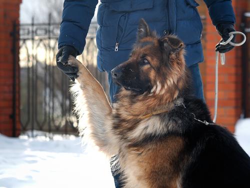Protezione civile animale