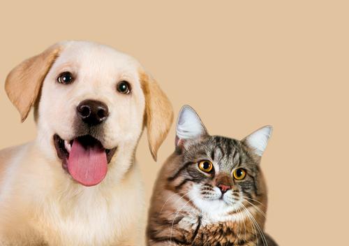 Capire il cane e il gatto