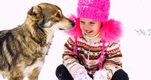 cosa evitare quando si gioca con il cane