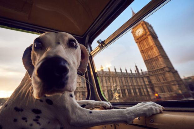 Autobus per cani