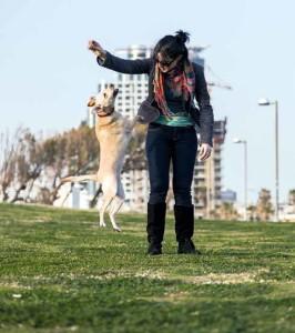 Aree per cani