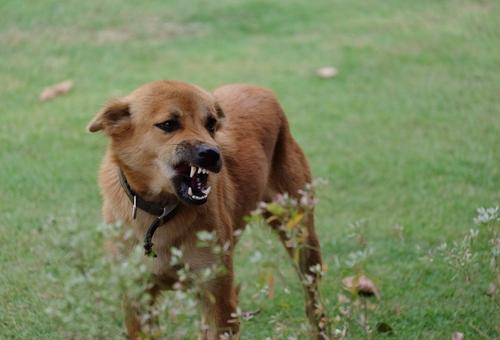 Cani aggressivi cani infelici aiutiamoli for Lavorare con i cani