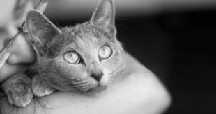 Gatti di razza