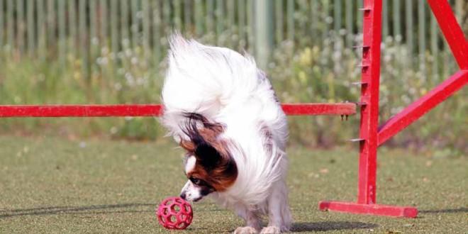 Osteopatia per cani