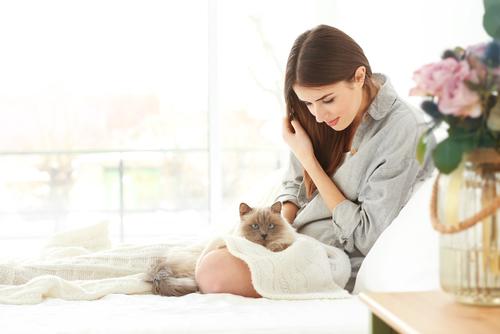 Un gatto come compagno