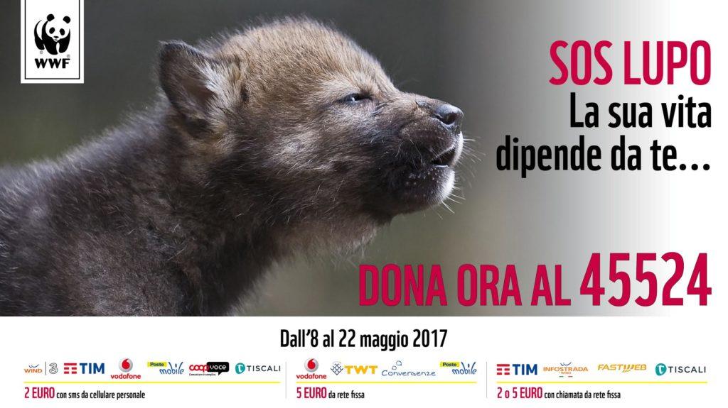 Aiutare il lupo