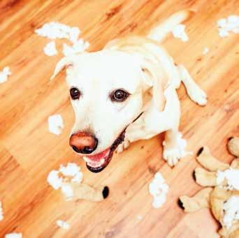 Cane solo in casa appartamento distrutto quattro zampe - Cane pipi letto ...
